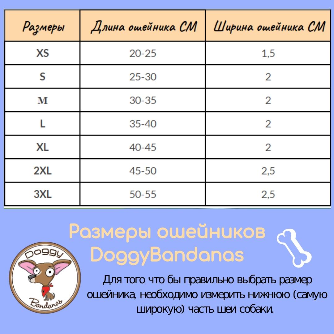 Как определить размер собаки для одежды